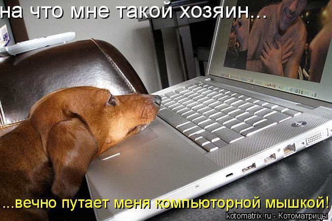 Котоматрица: на что мне такой хозяин... ...вечно путает меня компьюторной мышкой!
