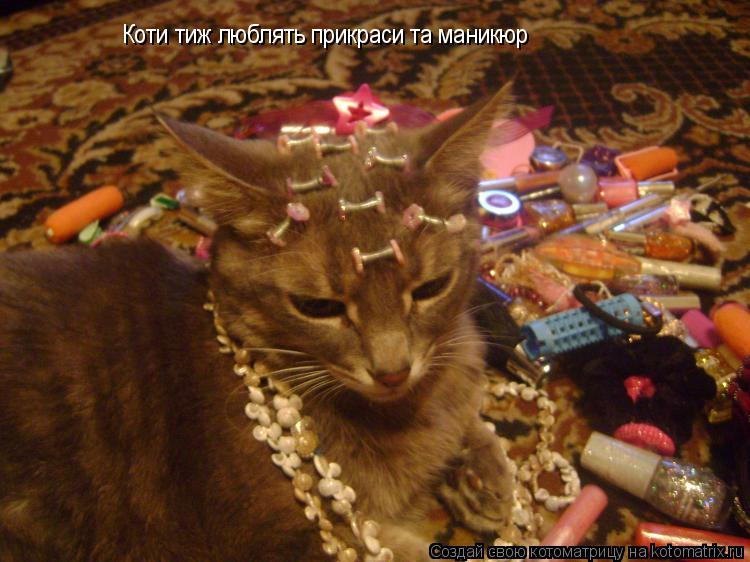 Котоматрица: Коти тиж люблять прикраси та маникюр