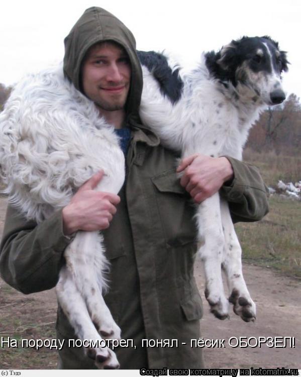 Котоматрица: На породу посмотрел, понял - пёсик ОБОРЗЕЛ!