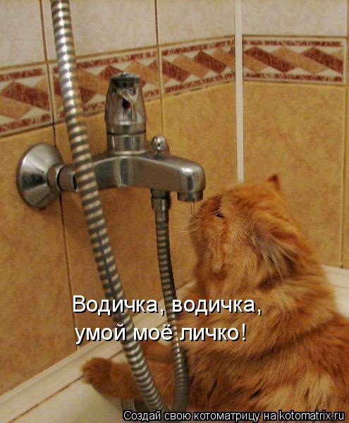 Котоматрица: Водичка, водичка, умой моё личко!
