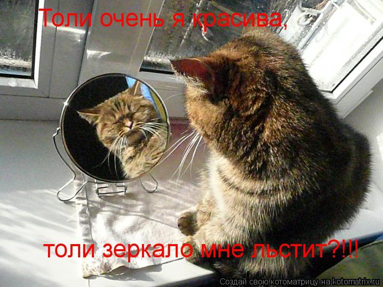 Котоматрица: Толи очень я красива, толи зеркало мне льстит?!!!