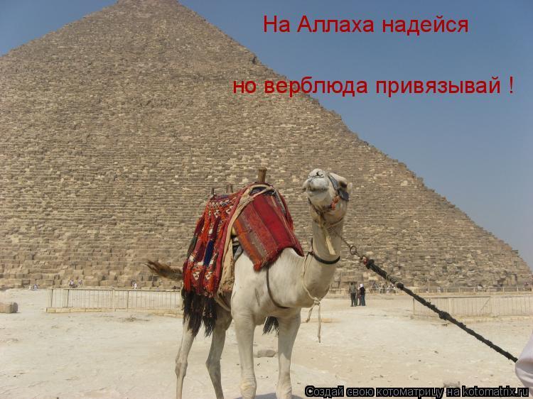 Котоматрица: На Аллаха надейся  но верблюда привязывай !