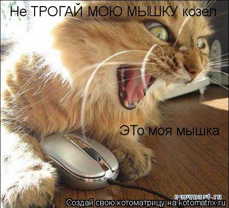 Котоматрица: Не ТРОГАЙ МОЮ МЫШКУ козел ЭТо моя мышка