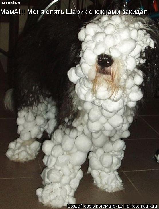 Котоматрица: МамА!!! Меня опять Шарик снежками закидал!