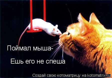 Котоматрица: Поймал мыша- Ешь его не спеша