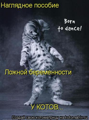 Котоматрица: Ложной беременности Наглядное пособие У КОТОВ...