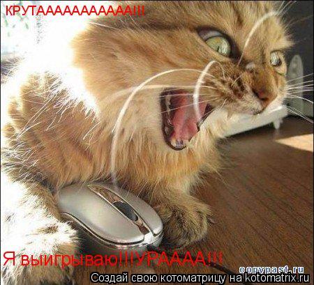 Котоматрица: КРУТААААААААААА!!! Я выигрываю!!!УРАААА!!!