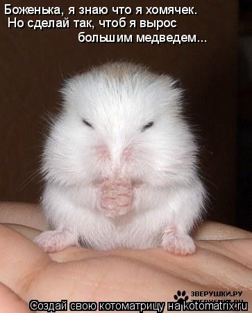 Котоматрица: Боженька, я знаю что я хомячек. Но сделай так, чтоб я вырос  большим медведем...