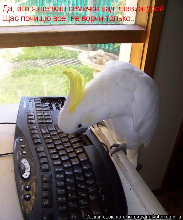 Котоматрица: Да, это я щелкал семечки над клавиатурой. Щас почищю всё, не ворчи только...