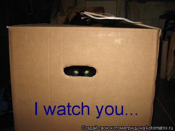 Котоматрица: I watch you...