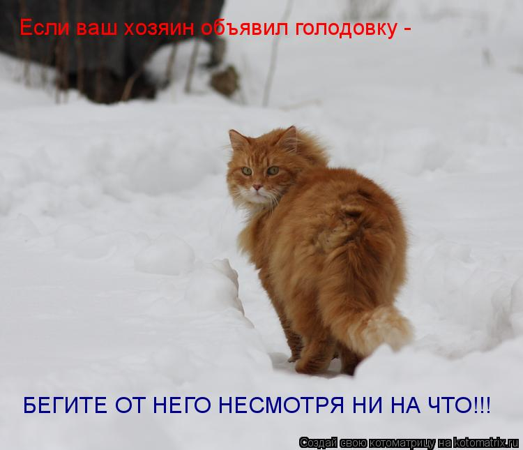 Котоматрица: Если ваш хозяин объявил голодовку - БЕГИТЕ ОТ НЕГО НЕСМОТРЯ НИ НА ЧТО!!!