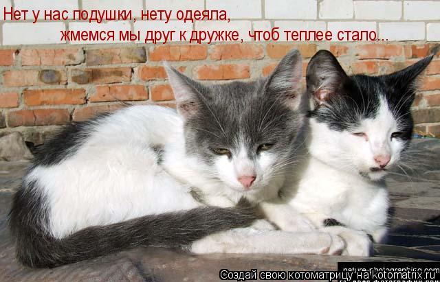 Котоматрица: Нет у нас подушки, нету одеяла, жмемся мы друг к дружке, чтоб теплее стало...