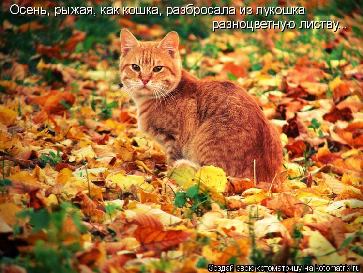 Котоматрица: Осень, рыжая, как кошка, разбросала из лукошка  разноцветную листву...