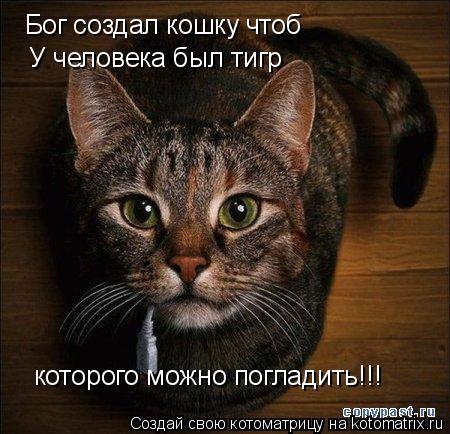 Котоматрица: Бог создал кошку чтоб У человека был тигр которого можно погладить!!!