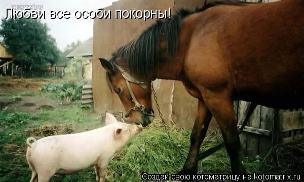 Котоматрица: Любви все особи покорны!