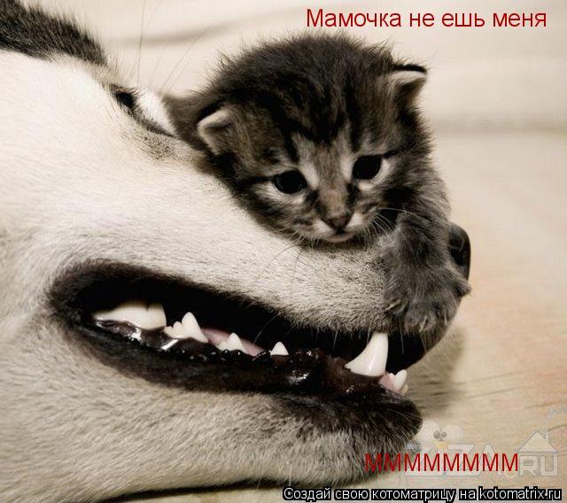 Котоматрица: Мамочка не ешь меня ММММММММ