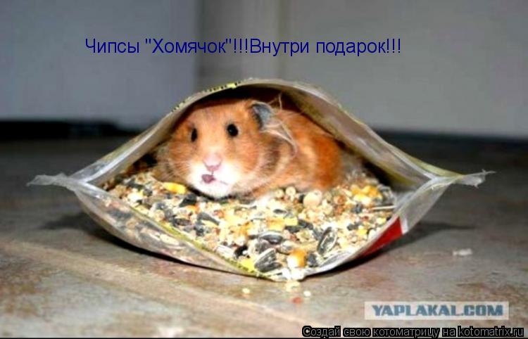 Фото приколы, прикольные картинки - Животные animals_0063