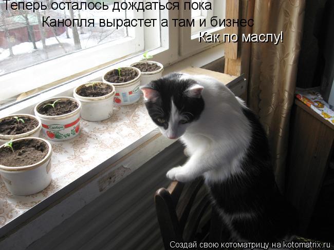 Котоматрица: Теперь осталось дождаться пока  Канопля вырастет а там и бизнес Как по маслу!