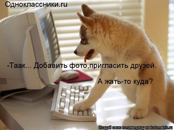 Котоматрица: Одноклассники.ru -Таак... Добавить фото,пригласить друзей. А жать-то куда?
