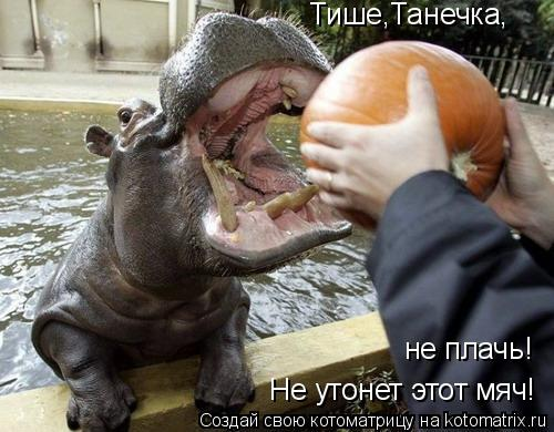 Котоматрица: Тише,Танечка, не плачь! Не утонет этот мяч!