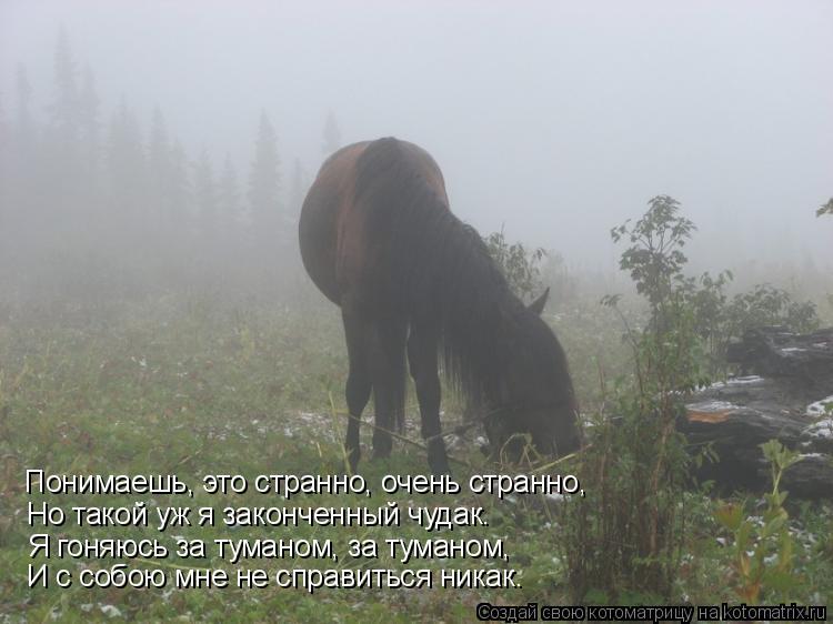 Котоматрица: Понимаешь, это странно, очень странно, Но такой уж я законченный чудак. Я гоняюсь за туманом, за туманом, И с собою мне не справиться никак.
