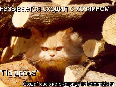 """Котоматрица: называется сходил с хозяином """"По дрова"""""""