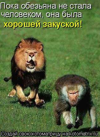 Котоматрица: Пока обезьяна не стала человеком, она была человеком, она была хорошей закуской!