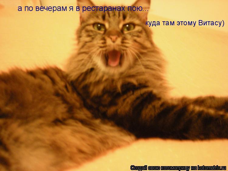 Котоматрица: а по вечерам я в рестаранах пою... куда там этому Витасу)