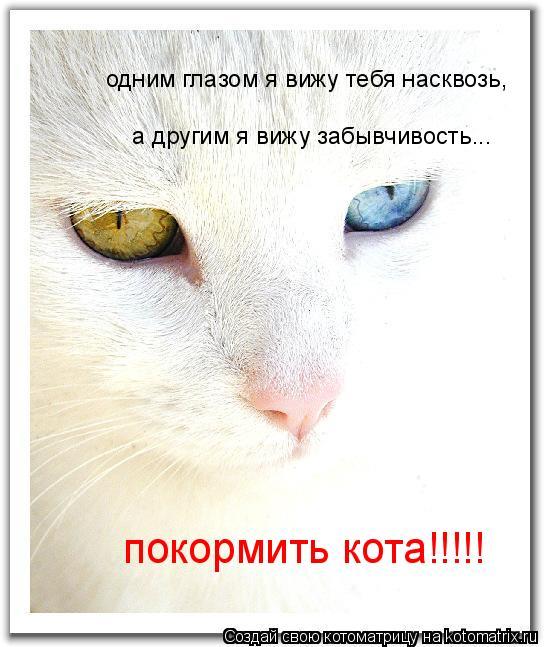 Котоматрица: одним глазом я вижу тебя насквозь, а другим я вижу забывчивость... покормить кота!!!!!
