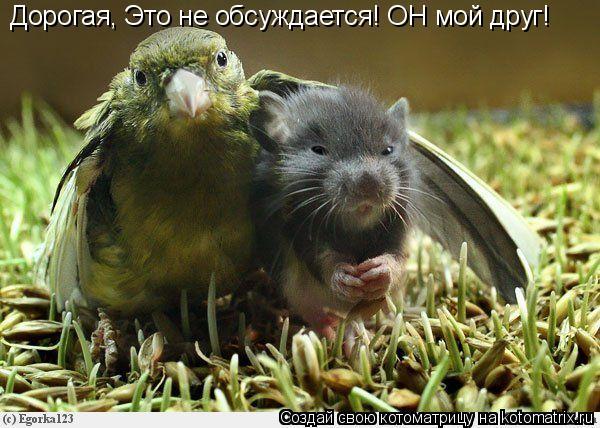 Котоматрица: Дорогая, Это не обсуждается! ОН мой друг!