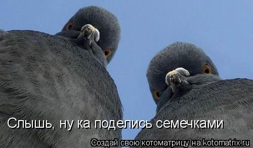 Котоматрица: Слышь, ну ка поделись семечками