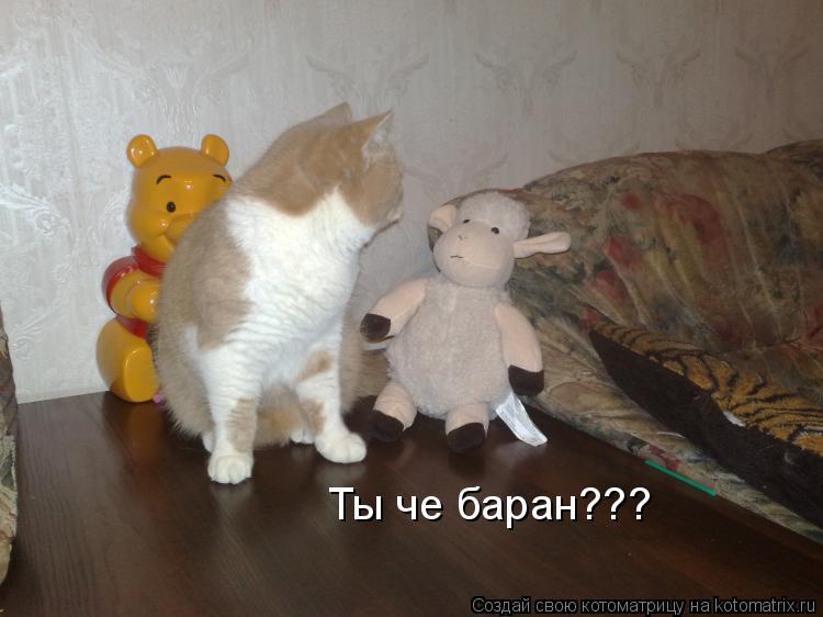 Котоматрица: Ты че баран???
