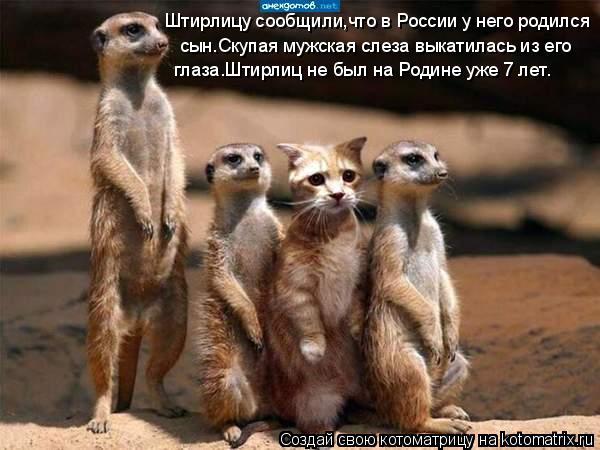 Котоматрица: Штирлицу сообщили,что в России у него родился  сын.Скупая мужская слеза выкатилась из его  глаза.Штирлиц не был на Родине уже 7 лет.