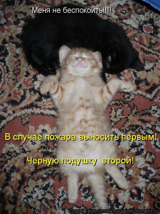 Котоматрица: Меня не беспокоить!!!! В случае пожара выносить первым! Черную подушку  второй!