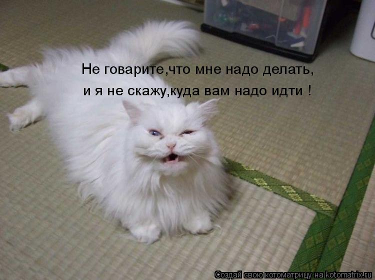 Котоматрица: Не говарите,что мне надо делать, и я не скажу,куда вам надо идти !