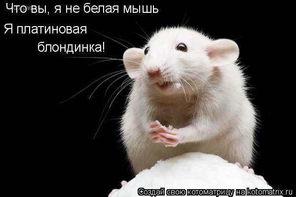 Котоматрица: Что вы, я не белая мышь Я платиновая блондинка!