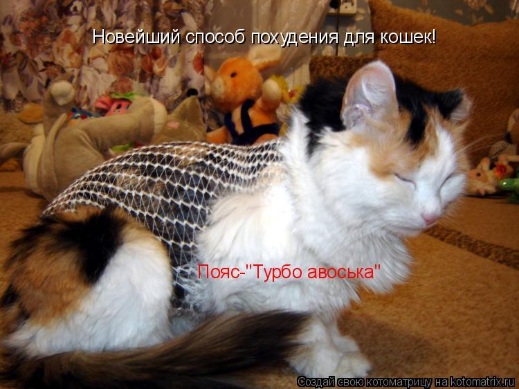 """Котоматрица: Новейший способ похудения для кошек! Пояс-""""Турбо авоська"""""""