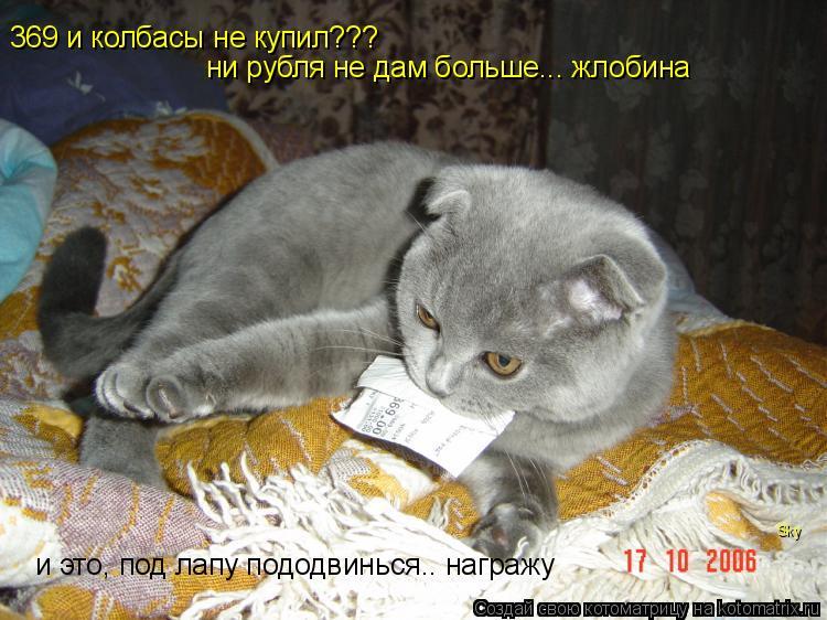 Котоматрица: 369 и колбасы не купил??? ни рубля не дам больше... жлобина и это, под лапу пододвинься.. награжу Sky