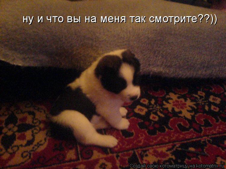 Котоматрица: ну и что вы на меня так смотрите??))