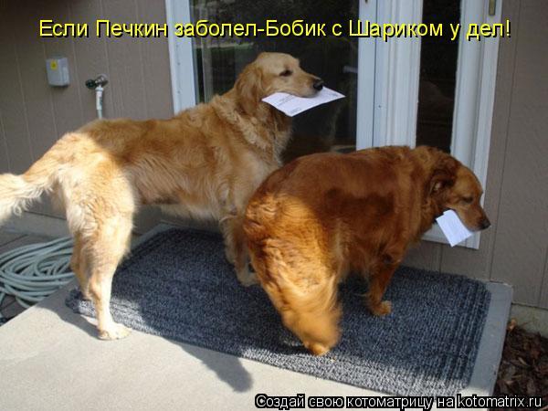 Котоматрица: Если Печкин заболел-Бобик с Шариком у дел!