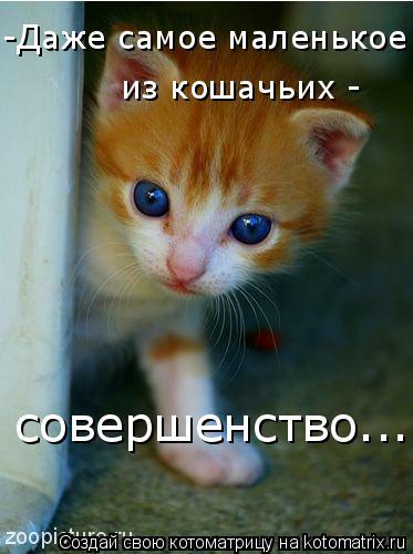 Котоматрица: -Даже самое маленькое   из кошачьих -   совершенство....