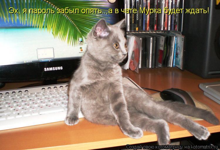 Котоматрица: Эх, я пароль забыл опять..,а в чате Мурка будет ждать!