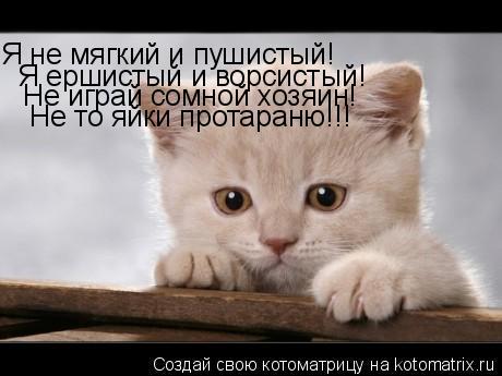 Котоматрица: Я не мягкий и пушистый! Я ершистый и ворсистый! Не играй сомной хозяин! Не то яйки протараню!!!