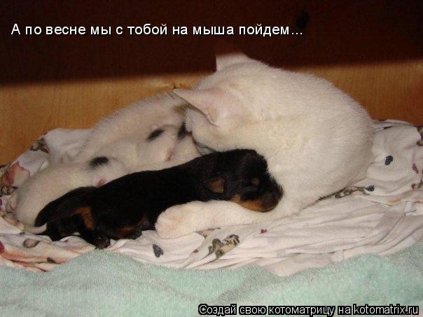 Котоматрица: А по весне мы с тобой на мыша пойдем...