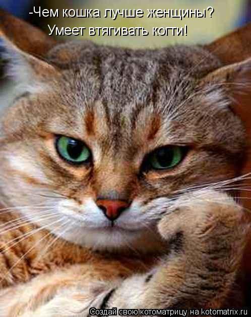 Котоматрица: -Чем кошка лучше женщины? Умеет втягивать когти!