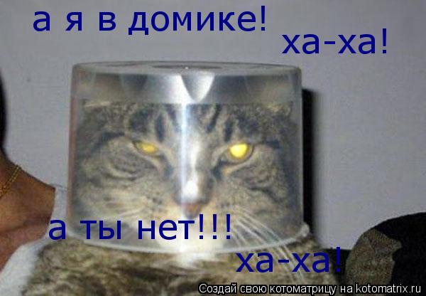 Котоматрица: а я в домике! ха-ха! а ты нет!!! ха-ха!