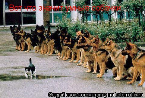 Котоматрица: Вот что значит умные собачки...