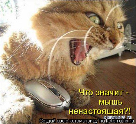 Котоматрица: Что значит - мышь ненастоящая?!