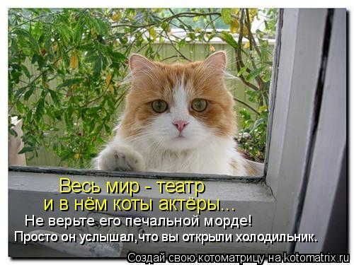 Котоматрица: Весь мир - театр и в нём коты актёры... Не верьте его печальной морде! Просто он услышал,что вы открыли холодильник. Просто он услышал,что вы о
