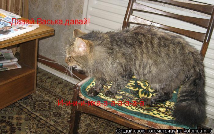 Котоматрица: -Давай Васька,давай! И-и-и-и-иха-а-а-а-а-а-а